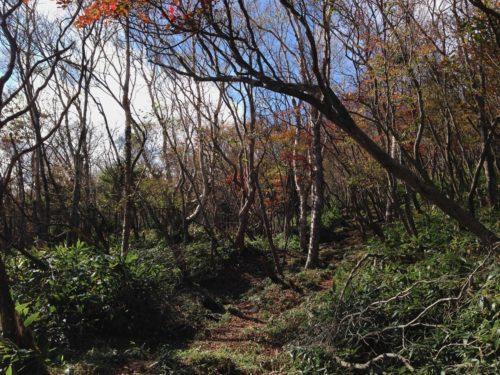 林間コース2
