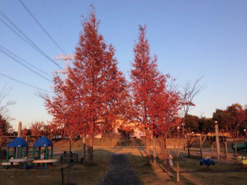 赤く染まる立木