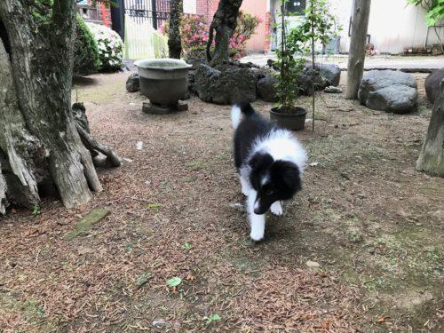 お庭でお散歩