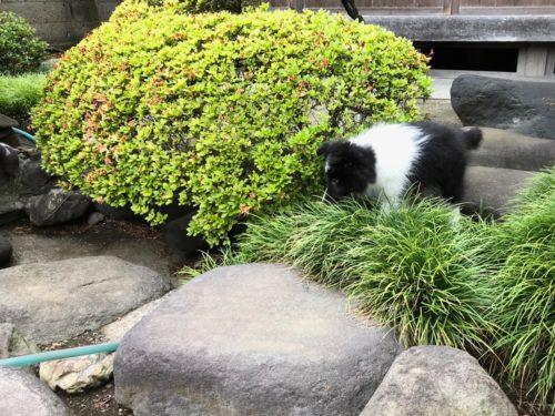 お庭で遊ぶスグハ