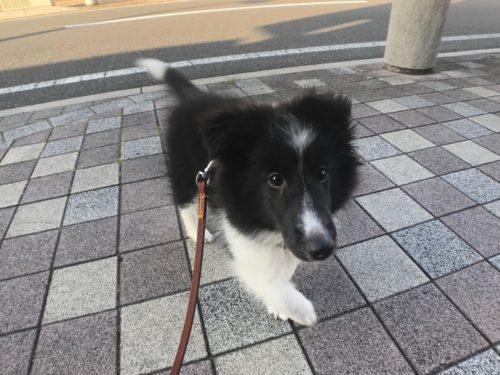 スグハのお散歩