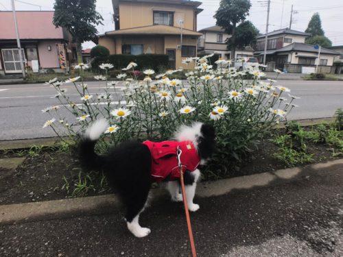 新しい散歩道
