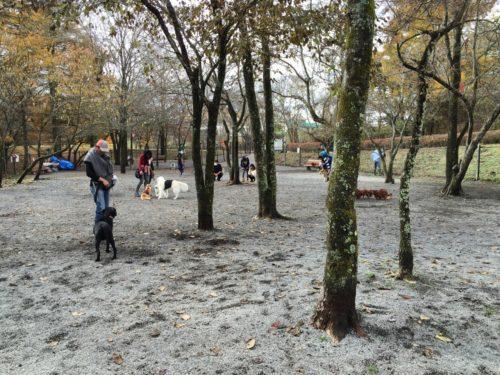 湯川ふるさと公園ドッグラン