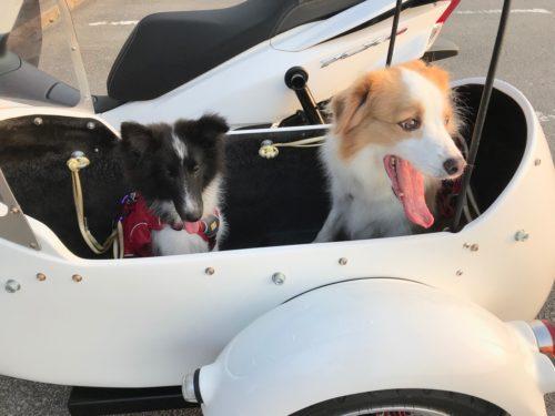 スグハバイクに乗る