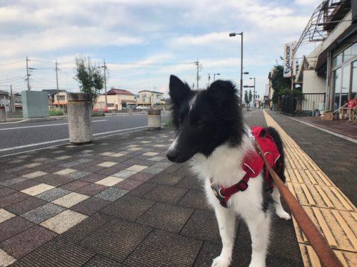 スグハと散歩