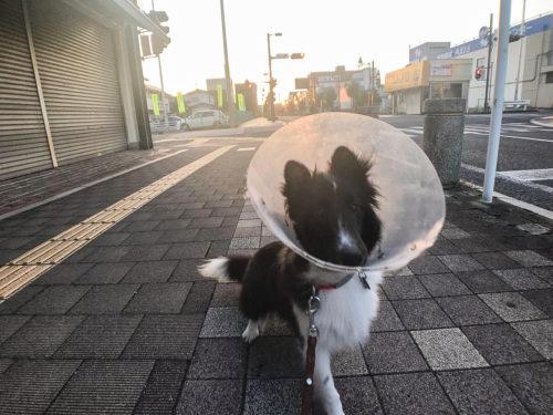 スグハの散歩